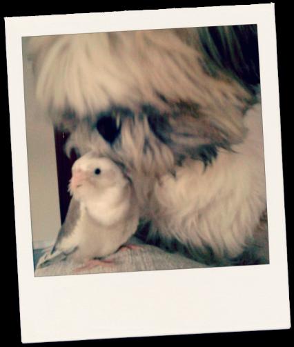 Coco y Rufo